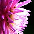 Flower by Anthony Kougl