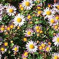 Flower Assault by Jim Moore