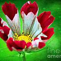 Flower by Billie-Jo Miller
