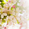 Flower Blossoms by Tetra Images