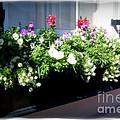 Flower Box 5 by Donna Bentley