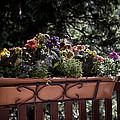 Flower Box by Madeline Ellis