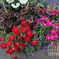 Flower Box by Vilas Malankar