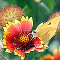 Flower Butterfly by Elizabeth Winter