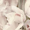 Flower Dream by Eena Bo