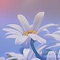 Flower For You by Jutta Maria Pusl