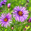 Flower Mania by Steve McKinzie