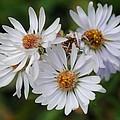 Flower by Martina  Schmidt