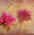 Flower Memories by Judi Bagwell