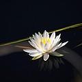 Flower Of The Marsh by Anthony Walker Sr