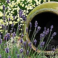 Flower Pot 5 by Allen Beatty