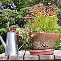 Flower Pot 6 by Allen Beatty