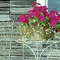Flower Pots ...... 4 by Allen Beatty