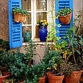 Flower Pots Galore by Lainie Wrightson