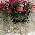 Flower Pots On Old Wall by Mike Nellums