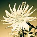 Flower Power by Steve McKinzie