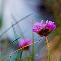 Flower by Sandor Petroman