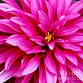 Flower Squared by Ronald Grogan