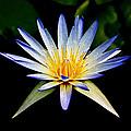 Flower Symmetry by Steve McKinzie