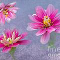 Flower Triplets by Betty LaRue