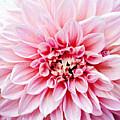 Flower by W-anshu