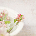Flowering Crabapple In Bowl by Cheryl McCain