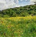 Flowering Fields by Michael Goyberg
