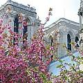 Flowering Notre Dame by Jennifer Ancker