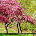 Flowering Tree by Kenneth Sponsler
