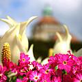 Flowers - Botanical Garden Munich by M Bleichner