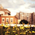 Flowers - High Line Park - New York City by Vivienne Gucwa