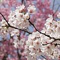 Flowers by Alan Grodin