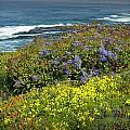 Flowers Along The Shore At La Jolla California No.0203 by Randall Nyhof