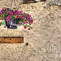 Flowers And A Signboard by Mats Silvan