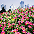 Flowers And Architecture Around Peoples Square by Jeremy Woodhouse