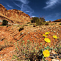 Flowers And Canyons by Adam Jewell