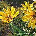 Flowers And Hopper by Jennifer Kelly