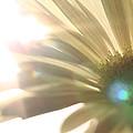 Flowers by Falko Follert