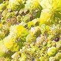 Flowers Flowers Everywhere by Kathy Zegarlinska