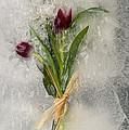 Flowers Frozen In Ice by Ted Kinsman