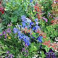 Flowers Galore by Carol Groenen