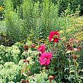 Flowers Galore by Terry Hunt