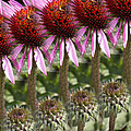Flowers In A Row by Renee Ledbetter