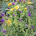 Flowers In Charlottenburg Palace Garden by Carol Groenen
