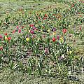Flowers In Spring by Evgeny Pisarev