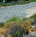 Flowers In The Gold Hill Desert by LeeAnn McLaneGoetz McLaneGoetzStudioLLCcom