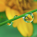 Flowers In Water Droplets by Thank you.