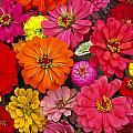 Flowers by Larry Landolfi