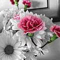 Flowers by Matthew Anderson