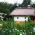 Flowers Near Rural House by Aleksandr Volkov